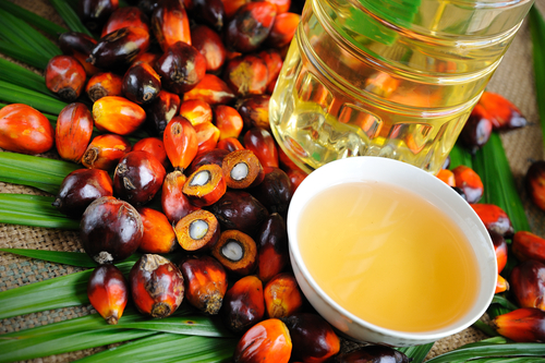 palm oil buisness